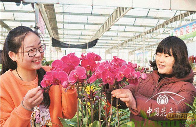 节后花卉市场升温 送花忙,采购忙!