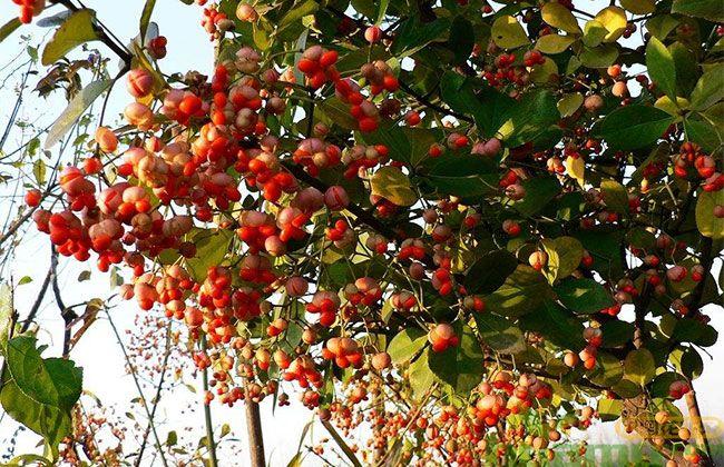 昆明市开展乡土树种苗木生产情况调查