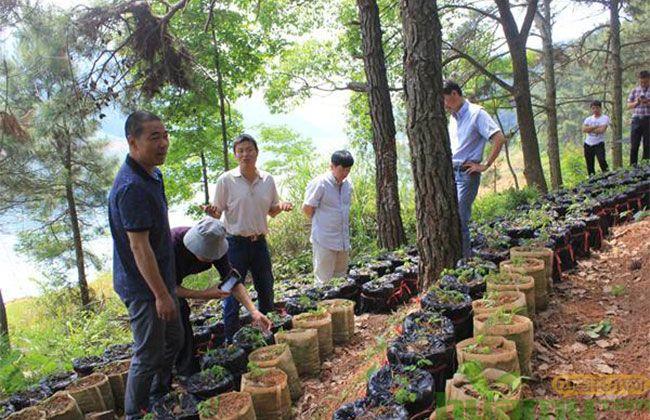 林下经济示范项目