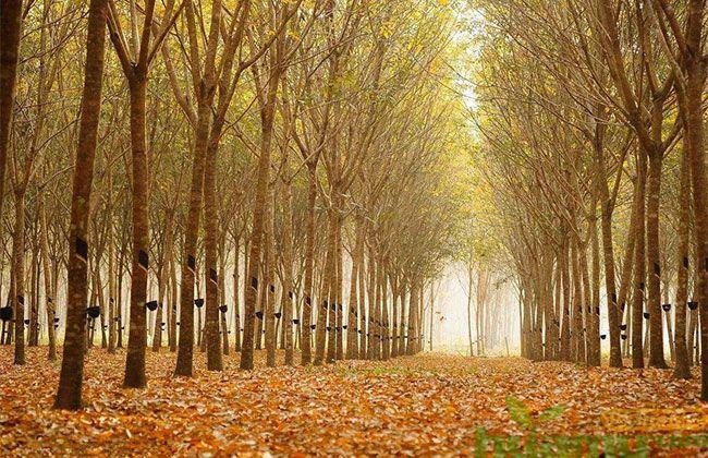 国家储备林示范项目
