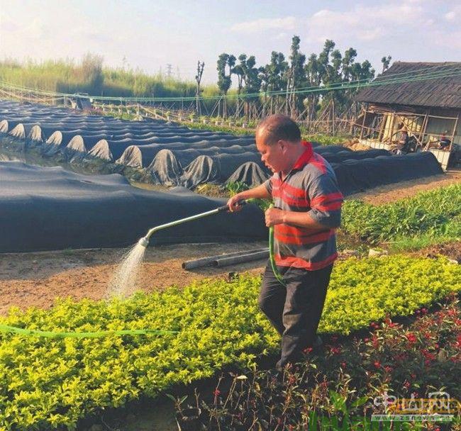 广东苗农种植袋子苗走上致富路