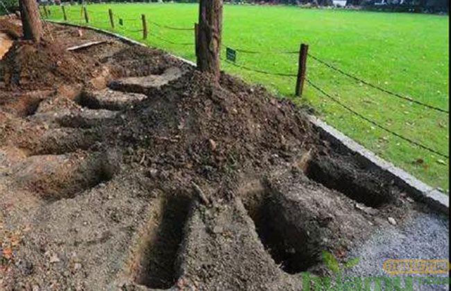 千万苗木人增收的秘诀,苗木养护施肥技巧