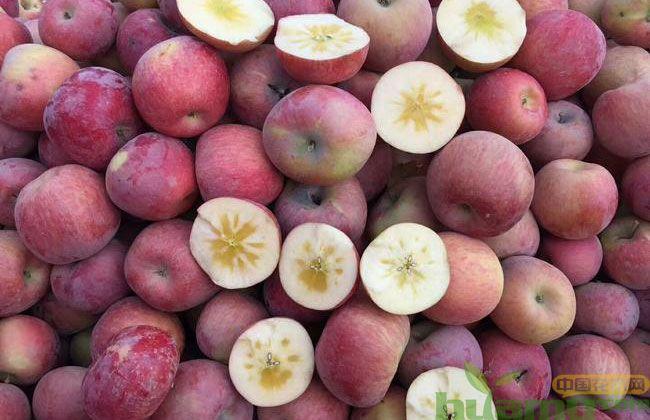 苹果冰糖心是怎么形成的?新疆苹果为什么这么好吃?