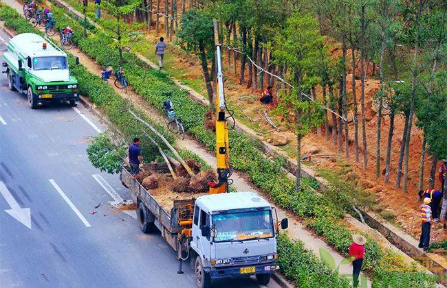 大规模国土绿化持续推进,绿化成效有哪些?