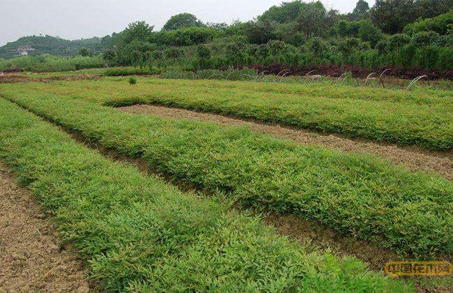 苗圃未来的发展方向将会偏向哪边?