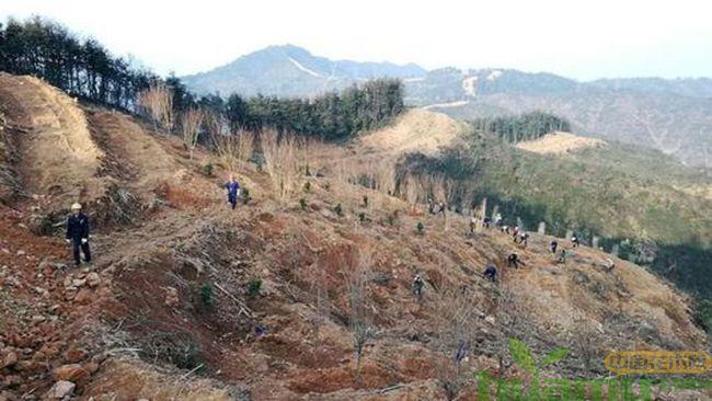 苗木产业的未来发展.jpg