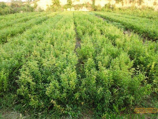 南方春雨季节绿植养护注意事项