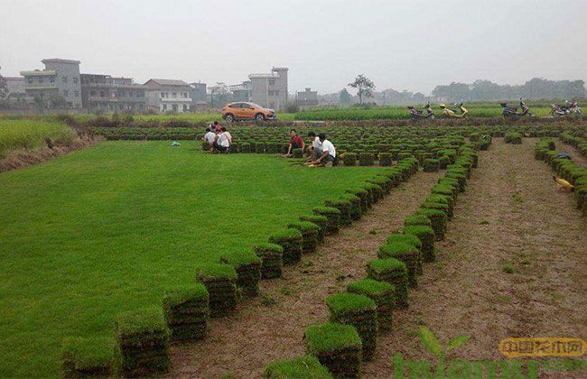 扶持草种业发展 这些难题亟待破解