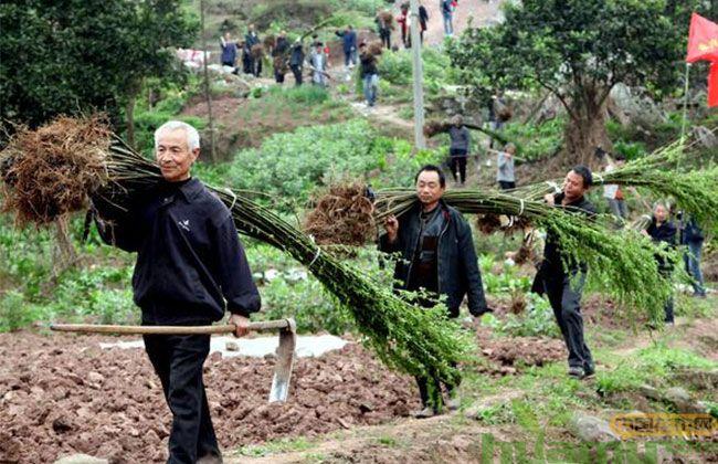 今年苗木行业有这些发展趋势