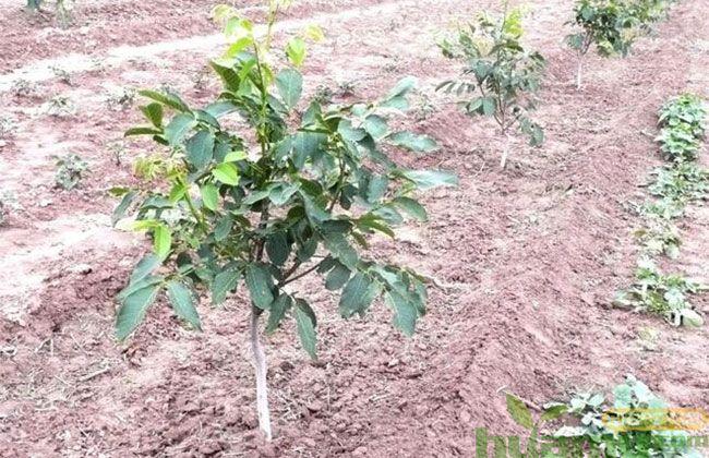 栽树种树,水很重要!
