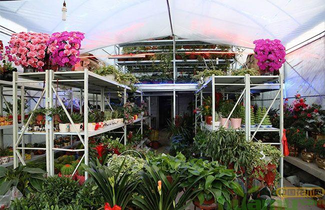 夏溪花市将着力打造庭院资材综合体