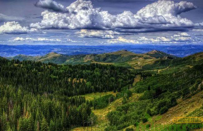 国家储备林过亿亩造林项目不断推进,哪些苗木被点名?