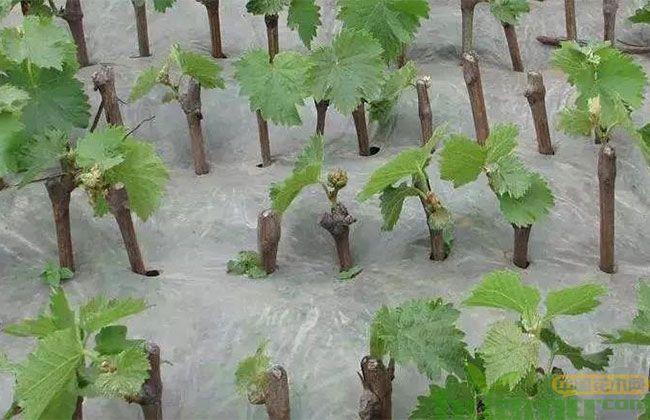 2019年度全国苗木供需有哪些要求?