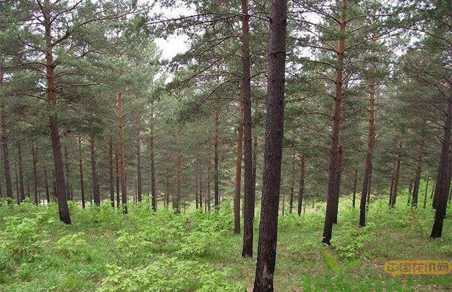 机遇来了!河北今年计划造林1000万亩