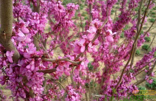 浏阳花木销售超40亿元,今年计划植树300万株