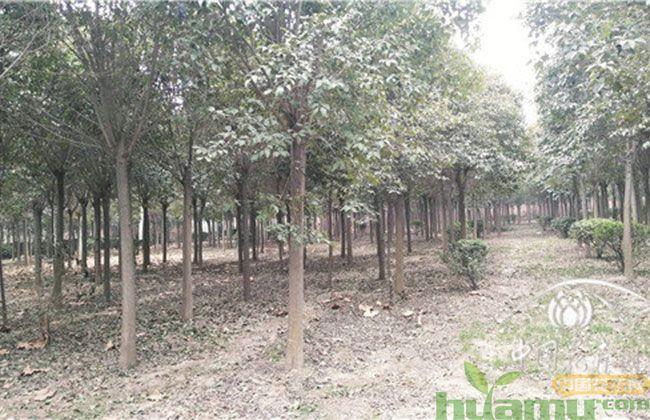 河南市场缺口大 苗圃升级未来可期