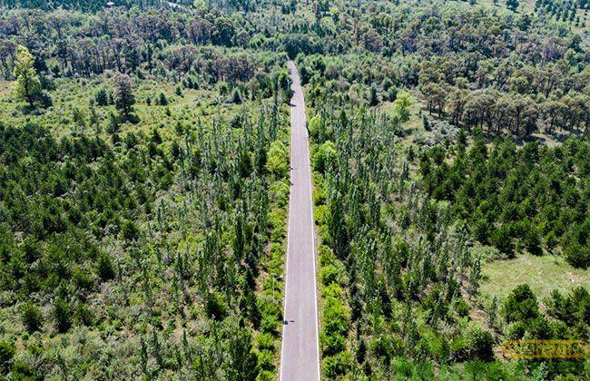 山西绿化造林工程已完成2.5万亩