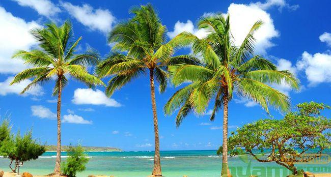 椰子树图片.jpg