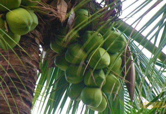 棕榈树图片.jpg