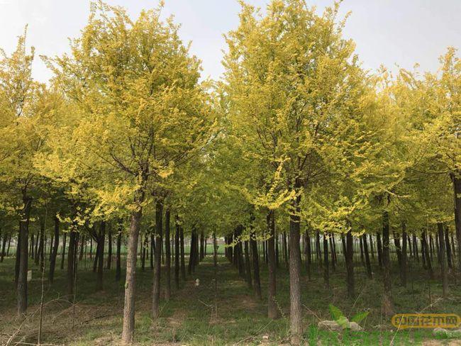 白榆树基地实拍