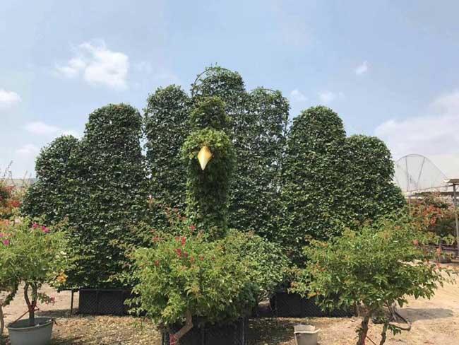 苗木行业竞争分析