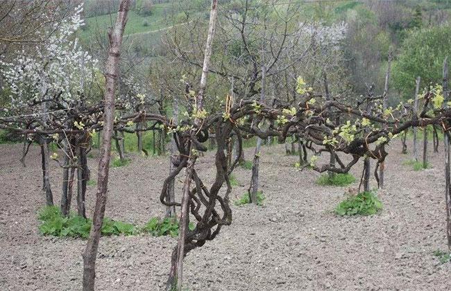 春季移栽有诀窍!这样种树成活率不低于95%