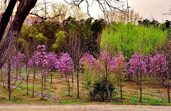 今年甘肃徽县的榆树乡苗木俏销