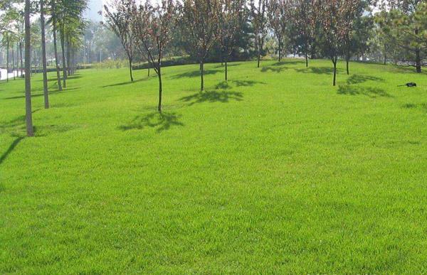 春季草坪养护管理重点