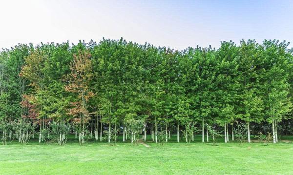 2019年各省市绿化造林都用哪些树?