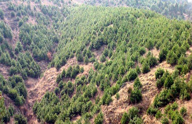 北京春季造林绿化建设全面启动