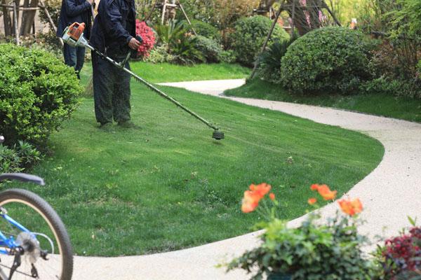 春季草坪养护