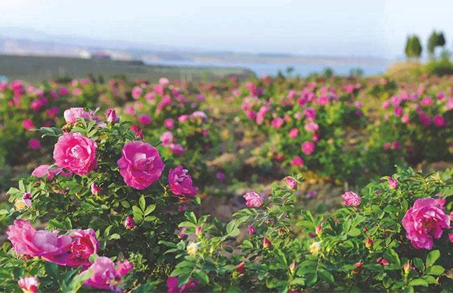 2019农村种植哪些花卉最赚钱?