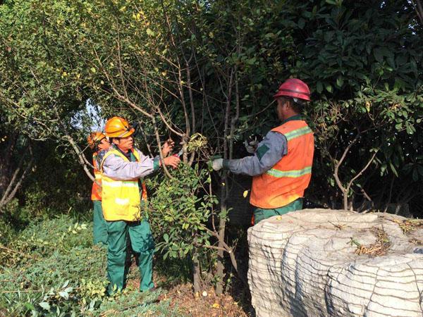 4月份园林绿化养护要点