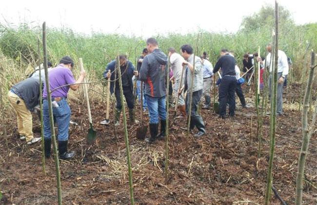 农民可以在耕地上种树吗?这个行为违法吗?