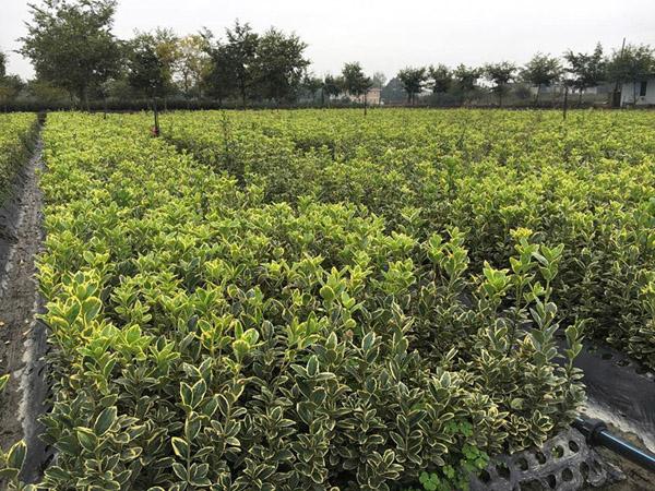 初入苗木行业,应该怎么做苗圃规划?