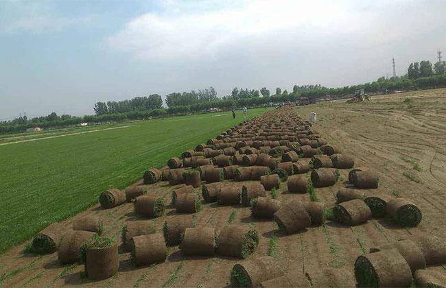 绿化苗木市场有哪些新需求?