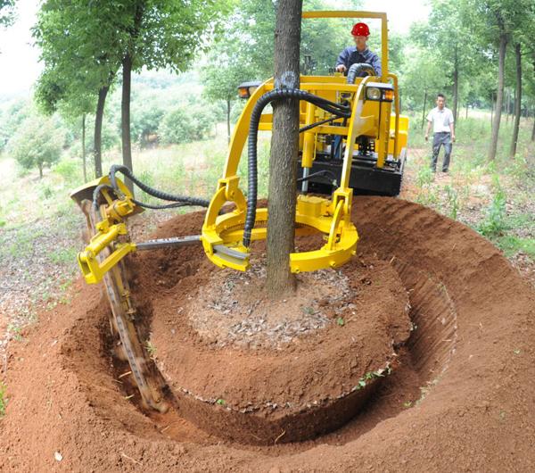 苗木断根方法