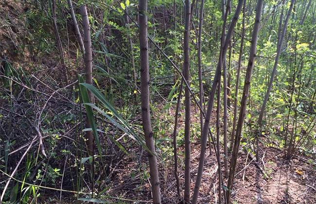苗木行业的宏观方向和微观需求