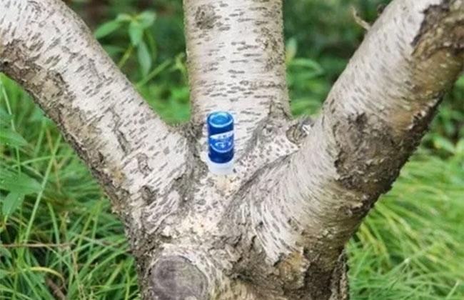 春季苗木病虫害什么方法防治最有效?