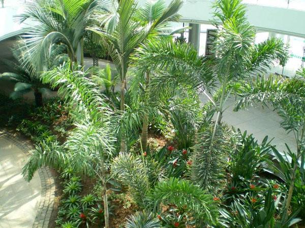 仿真狐尾椰子树和真实狐尾椰子的区别