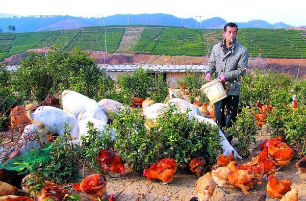 家庭农场和农村合作社有哪些区别和优势?