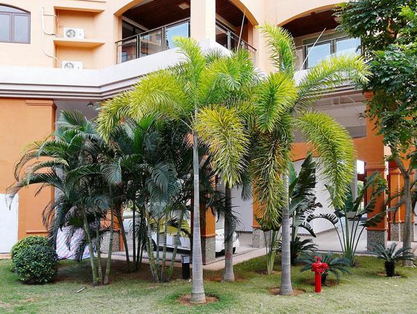 狐尾椰子景观的优点