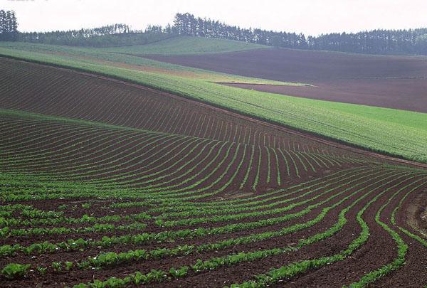 耕地地力保护补贴