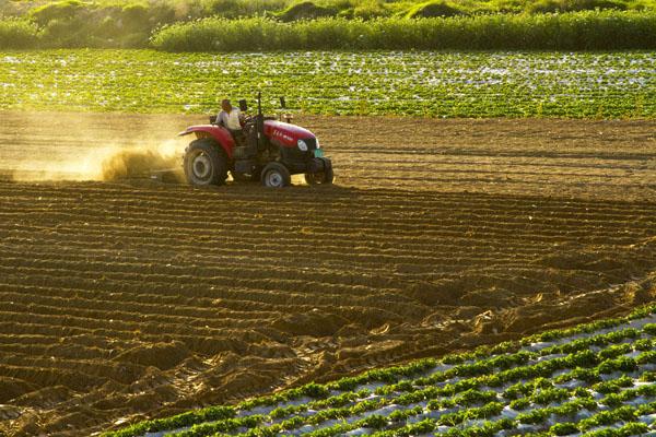 农村哪些土地不能领取耕地地力保护补贴?