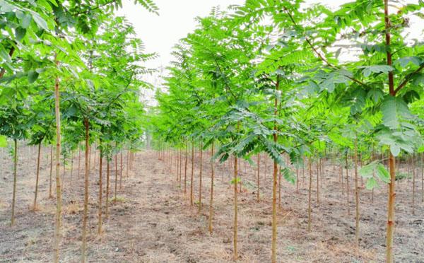 2019年的苗木种植计划,拿走不谢!