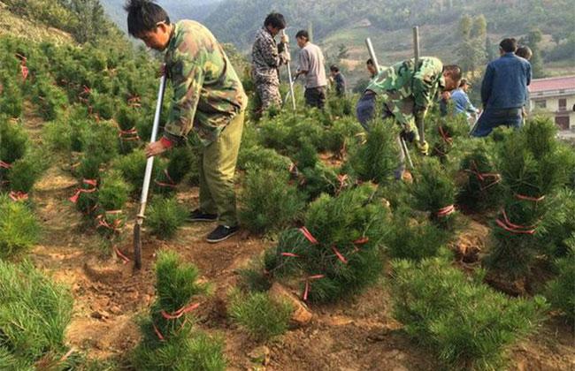 新疆平均每年义务植树1.2亿株