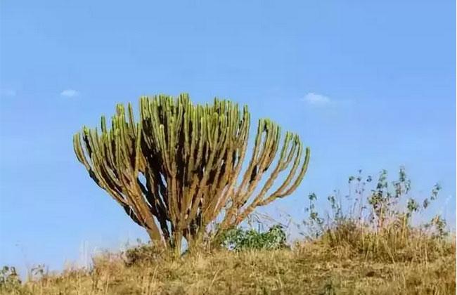 生态苗木流行,或将掀起一波热潮?