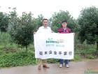花木网专访绿华园林有限公司陈经理陈青辉