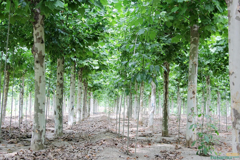 济宁润东园林