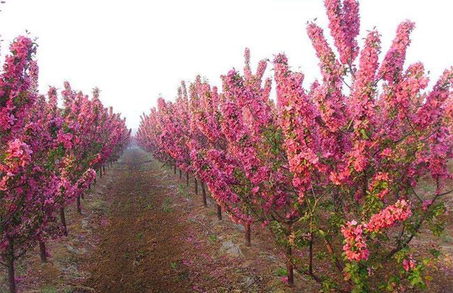 今年河南计划抚育450万亩中幼林